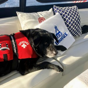 Dog with PFD on