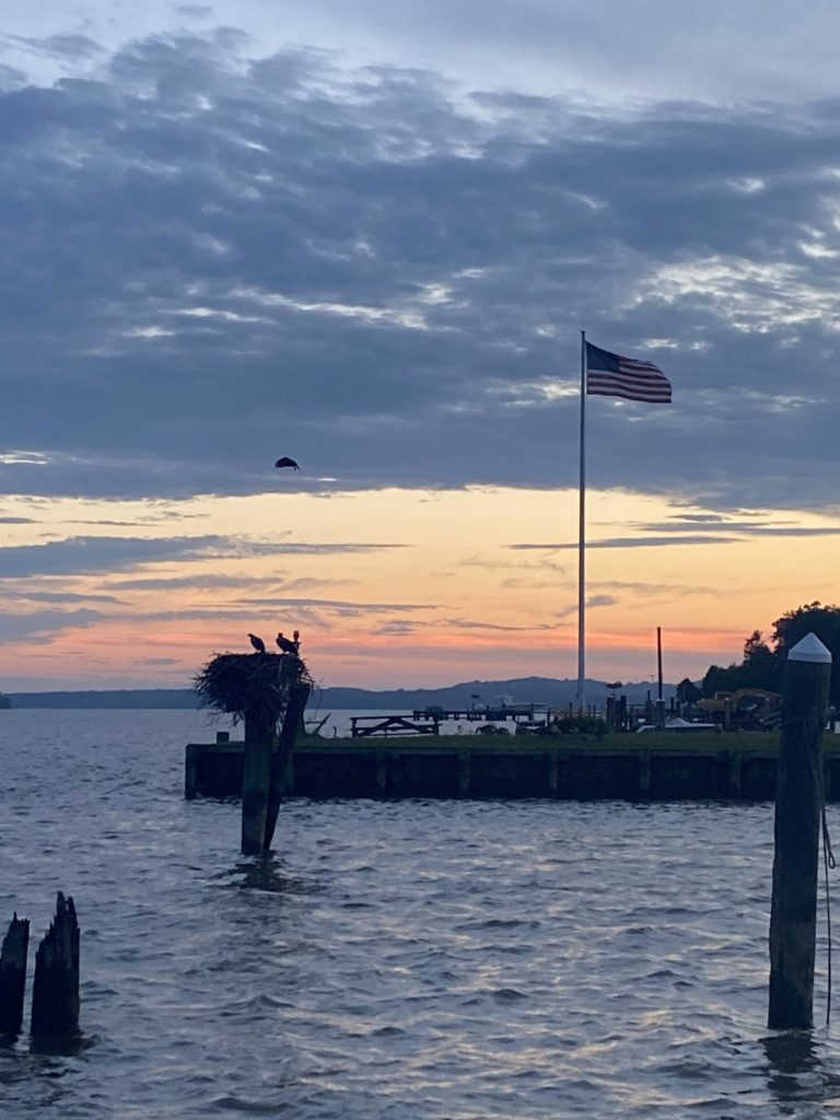 birds nest on the water, American flag blowing in the breeze